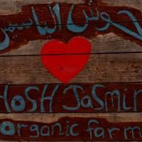 Hosh Jasmin - School Live